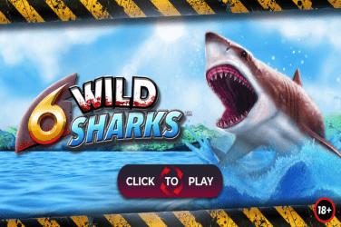 6-Wild-Sharks